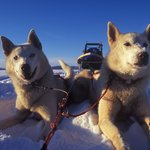 Arctic Adventure Tours - Day Tours