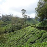 Bilde fra The Tea Sanctuary