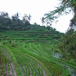 Foto de The Organic Farm Bali