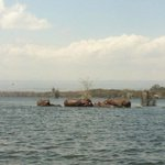 Hippos on Lake Naivasha boat ride