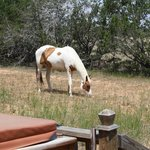 Foto de The Hideaway Ranch & Retreat
