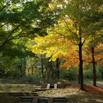 Fall Colors at Upton Hill Regional Park