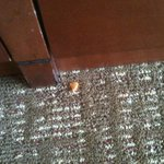 Only Pic of food on the floor of my hotel room when I checked, I did Lots of videos Of ALL The B