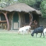 Lake Natron Tented Camp Foto