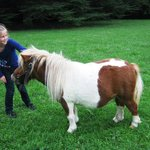 The miniature pony at the chateau