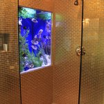Fish tank in the Cleopatra bathroom