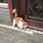 Lucky cat of Russia Youth Hostel in Harbin