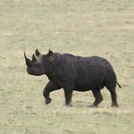 We came in the hopes of seeeing balck rhino