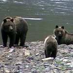 Foto di Tweedsmuir Park Lodge - Bella Coola Grizzly Bear Tours