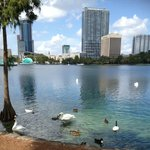 Swans at Lake Eola