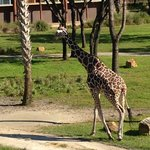 Hello Mr. Giraffe!