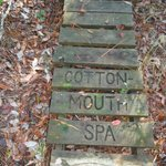 Cottonmouth Spa Boardwalk