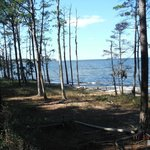 Pine Cliff area of Neusiok Trail beside Neuse River