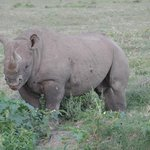 Wildlife Kenya Safaris - Day Trips Foto