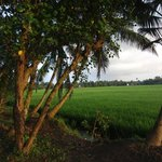 From a walk across the paddy fields
