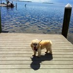 Walk on the dock with my dog!