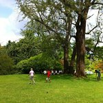 tall trees, and playing ground for children, in front of the house