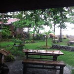 Gardens on a rainy afternoon before Yolanda hits