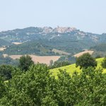 One can even see the beautiful city of Urbino from the farm