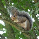 A friendly squirrel looking in from the Abbey Park