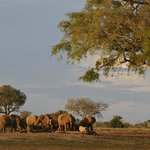 View of elephants at the water hole from tent