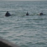 Dolphins spotted during dolphin trip