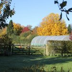 Autumn colours by polytunnel
