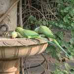 Parakeets (and chipmunk) having breakfast while we have ours