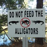 fun to see alligators