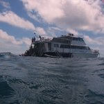 Reef Experience Day Tours Foto