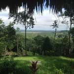 View from the Restaurant.  Atop the jungle canopy!!