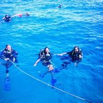 Crystal Dive Resort resmi