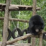 rescued bears near Luang Prabang