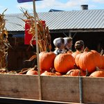 Ridiculously cheap pumpkins for sale