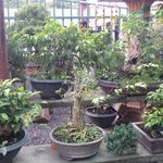 If you like Bonsai Trees, you will love this place.