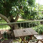 View from deck - Avocado trees