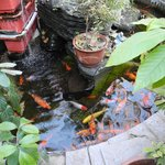 Fish pond in the courtyard