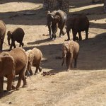 Sarova Salt Lick Game Lodge의 사진
