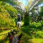 Horse back riding tour at Selva Bananito Lodge