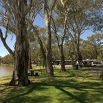 River gums at Riverside