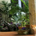 A pet sits in one of the decorated corners of the homestay