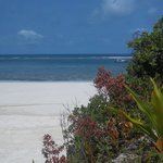 The Sands At Chale Islandの写真