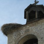 Storks nest on the church tower in Haskovo square