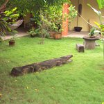 Crocodile in the garden
