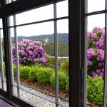 Rhododendrons from the lodge