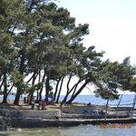 Photo of CampingIN Pineta Umag