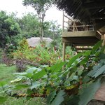 La Selva Amazon Ecolodge resmi
