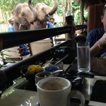 I'll have a Cappachino and a side of elephant.