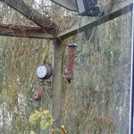 Woodpecker at breakfast