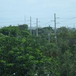 View of Port Everglades (above tree line) from 4th floor room/east side